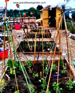 raised beds in a garden.